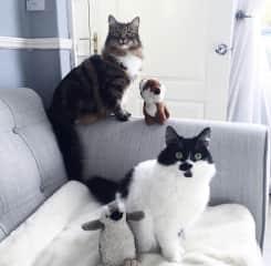 The two kitties