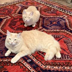 Two of our four Santa Fe, NM cats
