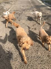 Benji leading the pack