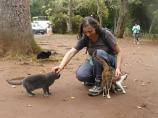 Sylvie and kittens in Madeira