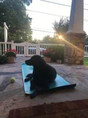Duke on my yoga mat during a beautiful evening in Atlanta, GA