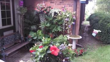 My backyard summer garden.