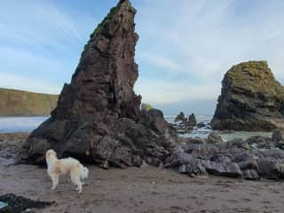 Loki on local beach Ballydwane cove.