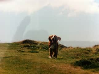 Gizzy enjoying a run in the hills
