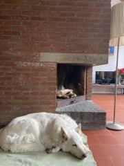 our family dog Nala!