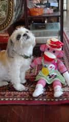Priscilla our sock monkey travel mascot...