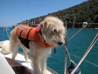Mingo the sailor dog, beep beep