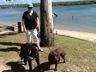 My cousin's two dogs in Queensland Australia