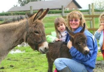 my mini donkeys