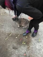 If I see a cat on the street I have to pet it!