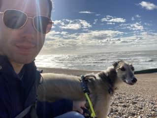 Housesitting with Jem (Saluki Greyhound) in Hove UK