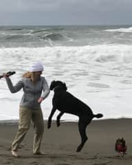 Love to take dogs to the beach!