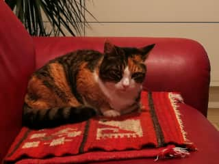 our cat Zora
