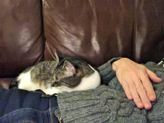 2017-12 - Massachusetts cat-sitting 2