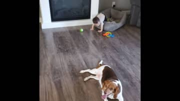 Willow is playing fetch with Leo haha or trading beds?
