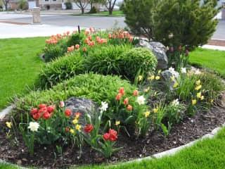 Front flower garden (a few years ago)