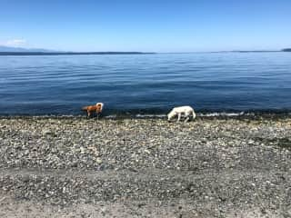 Our dogs at the beach in front of our house