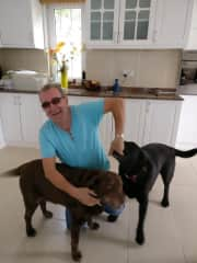 Barney  and Bramble, a chocolate and black labrador who we look after in the day for our friend on a regular basis. They are mum and son and like to get a grip whenever they can. Absolutely gorgeous