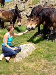 Me befriending half-wild horses in Edinburgh (2017)