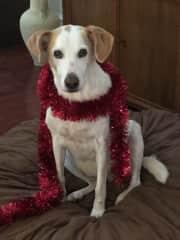 She got into Christmas 🎄 lol