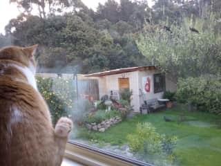 Looking through back window to garden