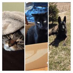 My three 'heart' animals