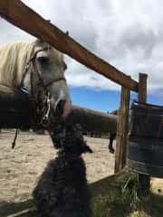 and she likes horses