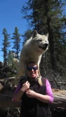 Yes this is a very large dog lol...this is Flora, a wolf from a sanctuary in Golden. I went on a walk with her (guides with me). Doesn't matter what kind of animal it is, I just love animals!