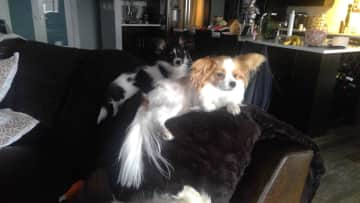 Taz n Sal checking kicking it back on the couch