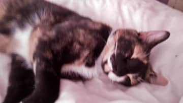 Sleeping next to mummy.