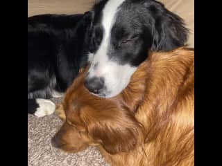 Guss and Griff have a live hate relationship. They play very rough and don't be surprised if it sounds like Griff is going to kill him. He won't.