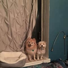 Both puppies! (this is an old apartment)