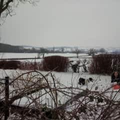 Benji in the snow