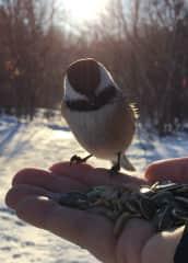 Feeding the birds on Mount Bruno