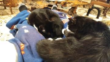 Tuffie & Tillie's favorite spot to nap.