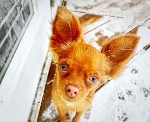 Oscar enjoying the snow :)