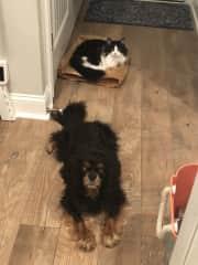 Zorro (dog) and Sgt. Pepper (cat)