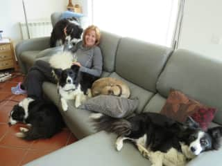 Yes, there are six dogs in this photo!