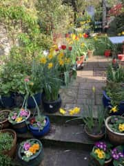 Our garden in the spring