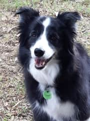 I am on the way to visit my parents in SA. I have a 9 day sit at Kyneton about an hour away for the local vet. Lucy, my 11 year old border collie travels with me. She is a gentle soul and likes her walks too!