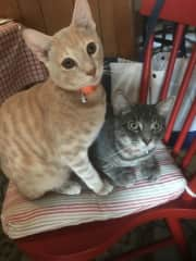 Logan and half-brother Flynn (1-year old) current rascals in my home.