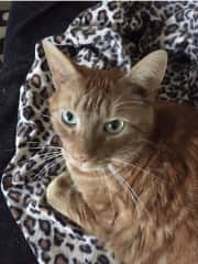 This my cat Harry.