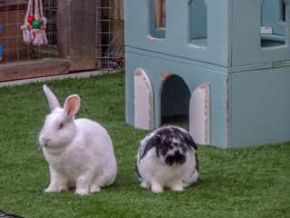 Bunnies we looked after in Dorset, UK