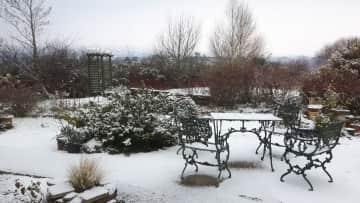 Part of my garden in winter
