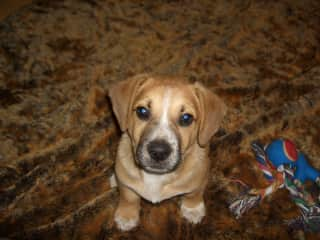 My cute foster puppy Willy that I picked up from the street after his mother along with his siblings disappeared