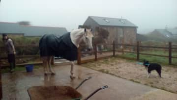 Pet sitting two horses,cats and a blind collie in Cornwall