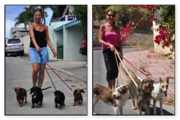 House and pet sitters Curacao (CaraÏben) and Alhaurin el Grande (Spain).