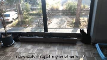 catsitting at my brother's