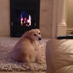 This is my dog Dusty chilling by the fire :)