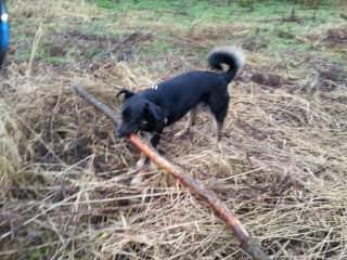 Big stick! Gelderland doggies.